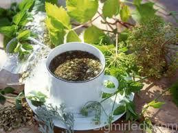 Листя сени для схуднення використовуйте обережно