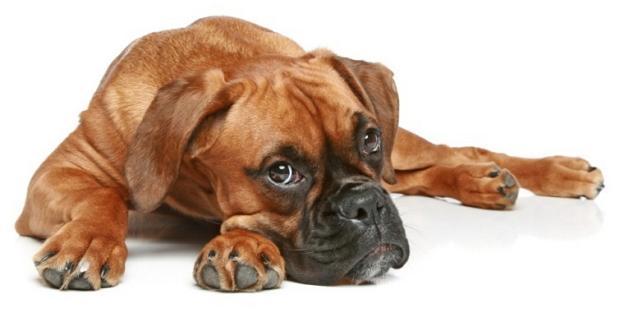 Собака для дітей – яку поробу вибрати 5