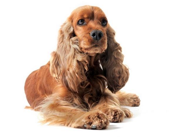 Собака для дітей – яку поробу вибрати 6