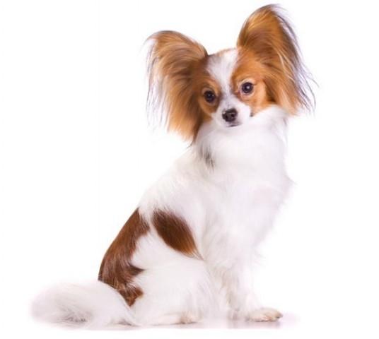 Собака для дітей – яку поробу вибрати 7