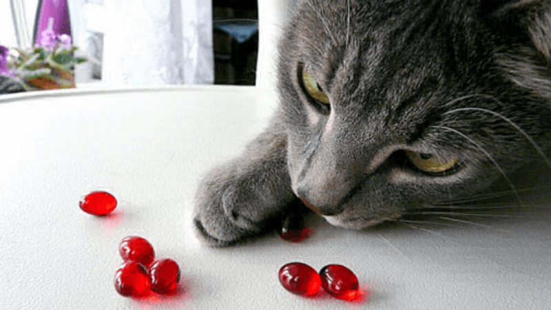 Вітаміни для котів. Підбірка ефективних та корисних вітамінів
