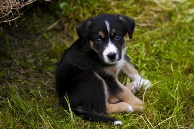 Як назвати собаку – імена, які підходять різним породам