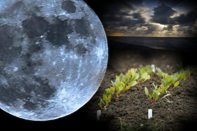 Місячний календар городника на лютий 2019 року