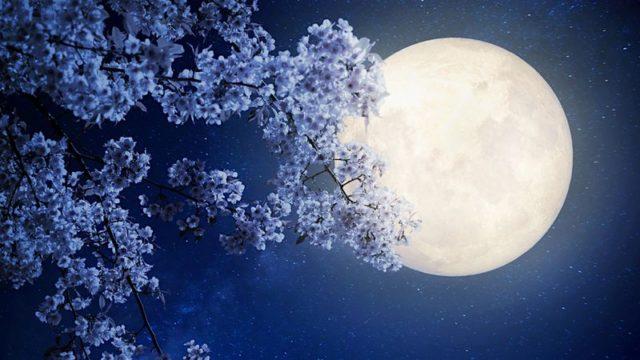 Місячний календар городника на квітень 2019 року