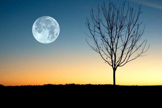Місячний календар городника на червень 2019 року