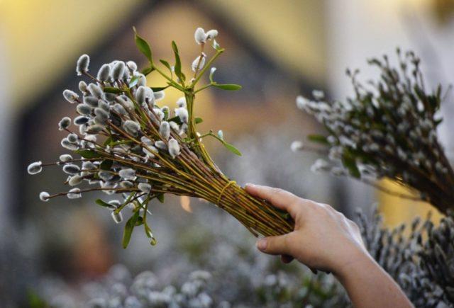 Вербна неділя 2019 – цікаві традиції та історія свята