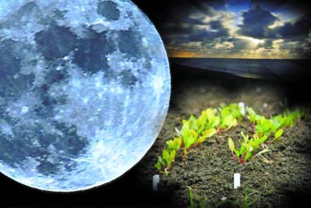 Місячний календар городника на березень 2020 року