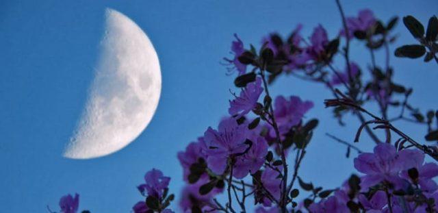 Місячний календар на липень 2020 року детально по дням